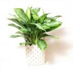Plant 14 - $40