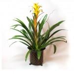 Plant 12 - $65